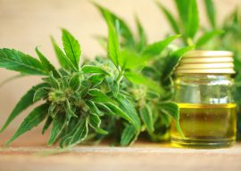 Why You Should Absolutely Care About CBD Now